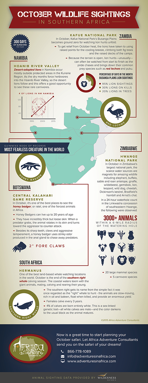 Africa Adventure Consultants • Infographic